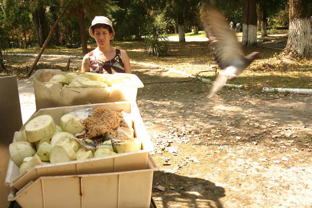 Georgien/Abchasien, Suchumi, 2006-08-25, Eine Taube fliegt weg, als eine Mittarbeiterin zu den Kisten für die Affenfütterung kommt. Das Affeninstitut in Suchumi war in der Sowjetzeit ein grosses Forschungsinstitut. Hier wurde u.a. am Rhesusaffen geforscht. Im Krieg wurde das Institut stark beschädigt und viele Tiere befreiten sich. Heute sind die verbliebenen Affen eine Touristenattraktion. Abchasien erklärte sich 1992 unabhängig von Georgien. Nach einem einjährigen blutigen Krieg zwischen den Abchasen und Georgiern besteht seit 1994 ein brüchiger Waffenstillstand, der von einer UNO-Beobachtermission unter personeller Beteiligung Deutschlands überwacht wird. Trotzdem gibt es, vor allem im Kodorital immer wieder bewaffnete Auseinandersetzungen zwischen den Armee der Länder sowie irregulären Kämpfern. (A dove flies away as an employee come to pick up the boxes for the ape feeding. The Monkey institut of Suchumi was a famous institution of science. The Rhesus monkey was one of the main tasks. DUring the war the institut became badly damaged and many apes fleed. Today the residual monkeys become a attraction for tourists. Abkhazia declared itself independent from Georgia in 1992. After a bloody civil war a UNO mission observing the ceasefire line between Georgia and Abkhazia since 1994. Nevertheless nearly every day armed incidents take place in the Kodori gorge between the both armys and unregular fighters)