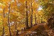 Europa, Deutschland, Nordrhein-Westfalen, Herbst im Wald am Ruhrhoehenweg im Ardeygebirge bei Herdecke. - <br /> <br /> Europe, Germany, North Rhine-Westphalia, autumn in a forest at the Ruhrhoehenweg in the Ardey mountains near Herdecke.