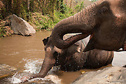Patara Elephant Farm; Chiang Mai, Thailand: elephants in water at Khaw Tar Chang Waterfall.
