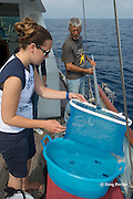 Viridiana Jimenez-Moratalla Pelhate, principal investigator for CSR research cruise of Tethys Research Institute collects samples of colonial hydrozoan Velella velella netted by R/V Pelagos captain Roberto Raineri within the Pelagos Sanctuary, Ligurian Sea, Italy ( Mediterranean Sea )