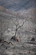 Jeceaba_MG, Brasil...Queimada florestal em Jeceaba, Minas Gerais...Burned forest in Jeceaba, Minas Gerais...Foto: JOAO MARCOS ROSA / NITRO