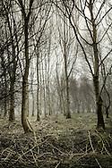 Moss Road, Linwood