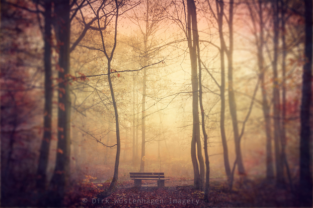 Single bench inn a park on a moody misty November morning<br />