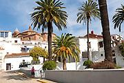 Palm trees and whitewashed buildings in the village of Galaroza, Sierra de Aracena, Huelva province, Spain
