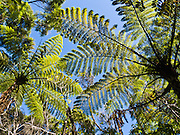 "Tree ferns, Abel Tasman National Park, South Island, New Zealand. Published in ""Light Travel: Photography on the Go"" by Tom Dempsey 2009, 2010."
