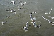 Birds and animals PR550A