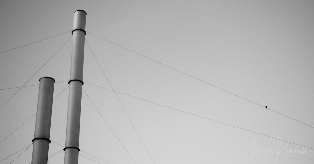 A tiny bird perches on a wire, balanced in simple composition with the urban space