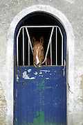 2/4/2002 .Sunday Timews Property.One of the Horses in the stables at Mount Loftus in Kilkenny..Picture Dylan Vaughan