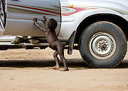 A Mursi child closing a 4x4's door. Omo valley, Ethiopia. The Mursi are a pastoralist ethnic group that inhabits southwestern Ethiopia. Mursi can be found in the land between the Omo and Mago rivers. Neighbored by the Surma, Ari, Kwegu, Karo and Bodi, the Mursi are about 6000 in number. The Mursi women have huge lip plate that is put as a sign of beauty just before the wedding time, when they are around 16.