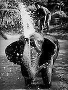 Elephants bathing at the Four Seasons Golden Triangle resort