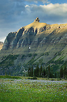 Alpine meadows at Logan Pass with the Bishop's Cap in the distance, Glacier National Park Montana USA