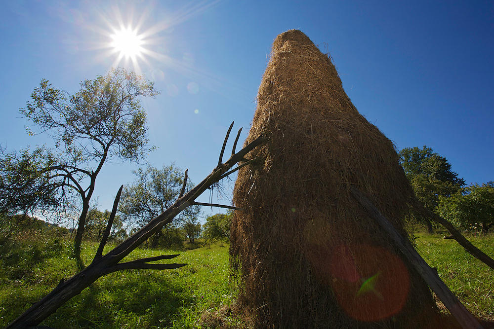 Traditional hay stacks in orchards of the village Nova Sedlica, Slovakia.