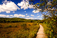 landscape of boardwalk and mountains at Cranberry Glades in West Virginia