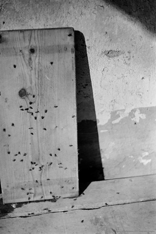 Board and Flies, Molln, Austria, 1935