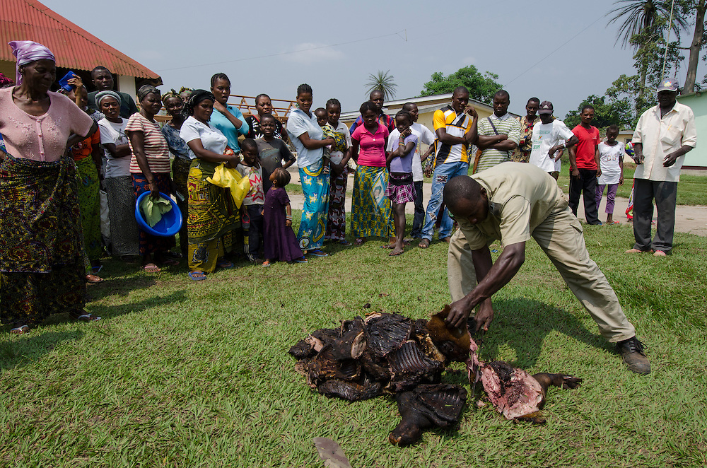 Distribution of confiscated bushmeat to hospital<br /> near Makoua<br /> Republic of Congo (Congo - Brazzaville)<br /> AFRICA