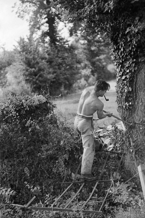 Felling Trees, Galhampton, Somerset, c.1935