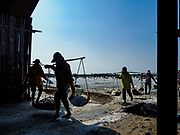 20 FEBRUARY 2019 - BAN LAEM, PHETCHABURI, THAILAND: Salt workers bring salt into the warehouse on one of the first days of the 2019 salt harvest in Ban Laem, Thailand. Ban Laem's salt fields are expanding because salt harvesters in Samut Sakhon and Samut Songkhram,  which are closer to Bangkok, are moving to Ban Laem as their land is turned into industrial parks.       PHOTO BY JACK KURTZ