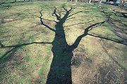 shadow of tree on the ground