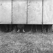 Legs peeking out under long drops, Glastonbury, Somerset, 1989