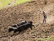 Farmer tills steep field with oxen pulling plow at Pishgopampa village in Jancapampa Valley, Cordillera Blanca, Andes Mountains, Peru, South America. Day 4 of 10 days trekking around Alpamayo in Huascaran National Park.