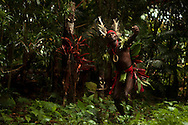 Chief Ayar performing a kastom dance of his ancestors, Near the village of Wintua, South West Bay, Malekula, Vanuatu