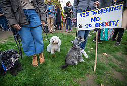 """© Licensed to London News Pictures. 07/10/2018. London, UK. Dogs stand with their pro-remain owners during a rally in Parliament Square to demand a """"People's Vote"""" on the final Brexit agreement.  Photo credit: Peter Macdiarmid/LNP"""
