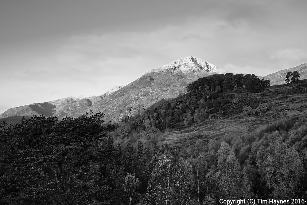 A sprinkling of snow overnight crowning Sgurr na Lapaich, with a wisp of morning mist and a stand of Scots Pine trees in the foreground.