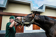 Tully, The Irish National Stud is the heart of Ireland's thoroughbred industry. Invincible Spirit, sprinter champion of Ireland 2001, is one of the 8 stallions of the stud.