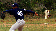 024222.SP.0114.angels11.kc--San Pedro de Macoris, Dominican Republic--Right-handed pitcher Daniel Arias goes through some pitching motions as cows watch from the field behind the Anaheim Angels Academy. At a young age Dominican boys learn that baseball could be their chance to make it in the big leagues. The baseball academies run by MLB teams provides an all around learning experience for boys once they reach sixteen.