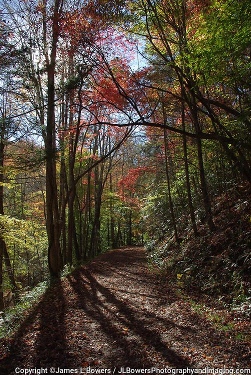 Autumn Path near Bryson City, NC