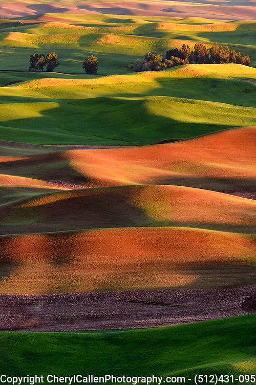 Colors come alive in the hills of the Palouse region of Washington