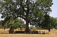 Forestry Africa 04
