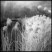 Alder Carr (Infrared Film Photography) 2013