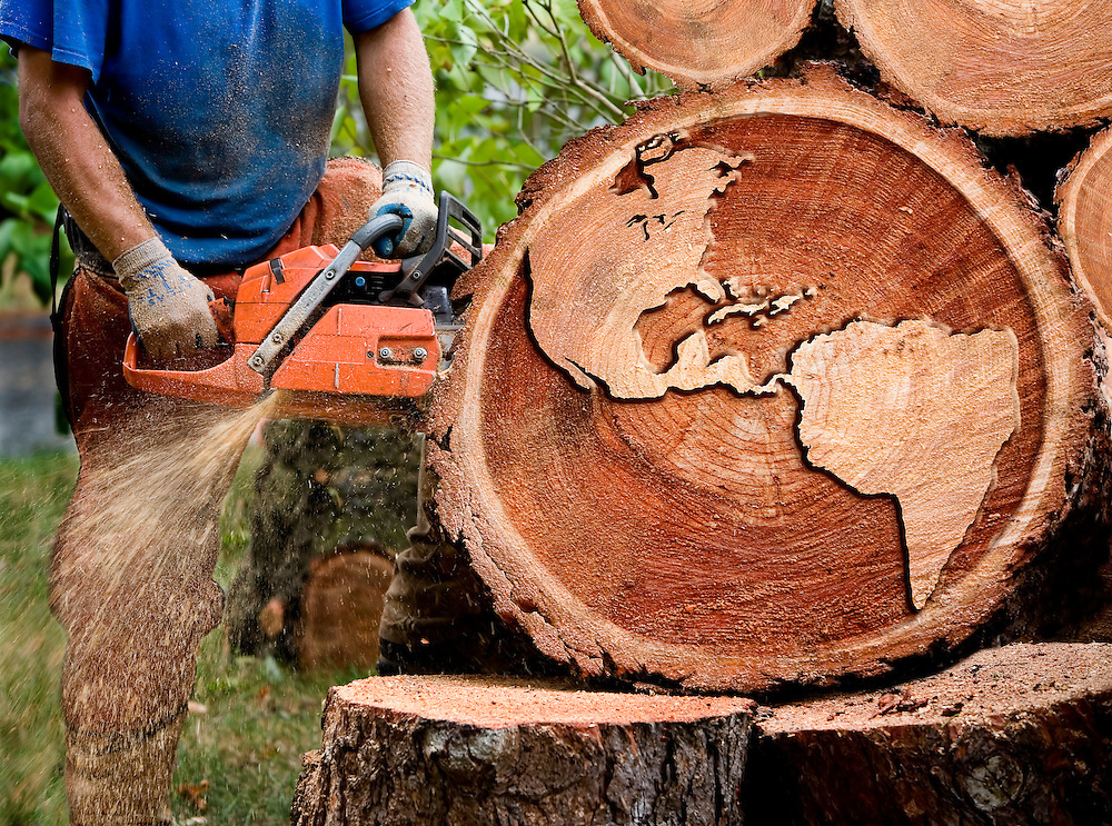 A digital look at the global impact of the forest industry.
