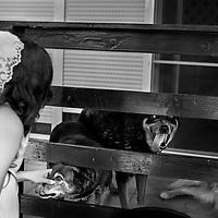 Mireasa in ziua nuntii, jucandu-se cu cainii acasa