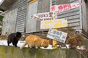V&auml;gskylt p&aring; &ouml;n Tashirojima som kallas f&ouml;r &quot;katt&ouml;n&quot; eftersom h&auml;r lever hundratals katter tillsammans med ca 50 personer.   <br /> Ishinomaki, Miyagi Prefecture, Japan. <br /> Fotograf: Christina Sj&ouml;gren<br /> Copyright 2018, All Rights Reserved