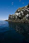 Bird cliffs in Grimsey, Iceland