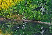 Reflection of trees along a river, Mactaquac, New Brunswick, Canada