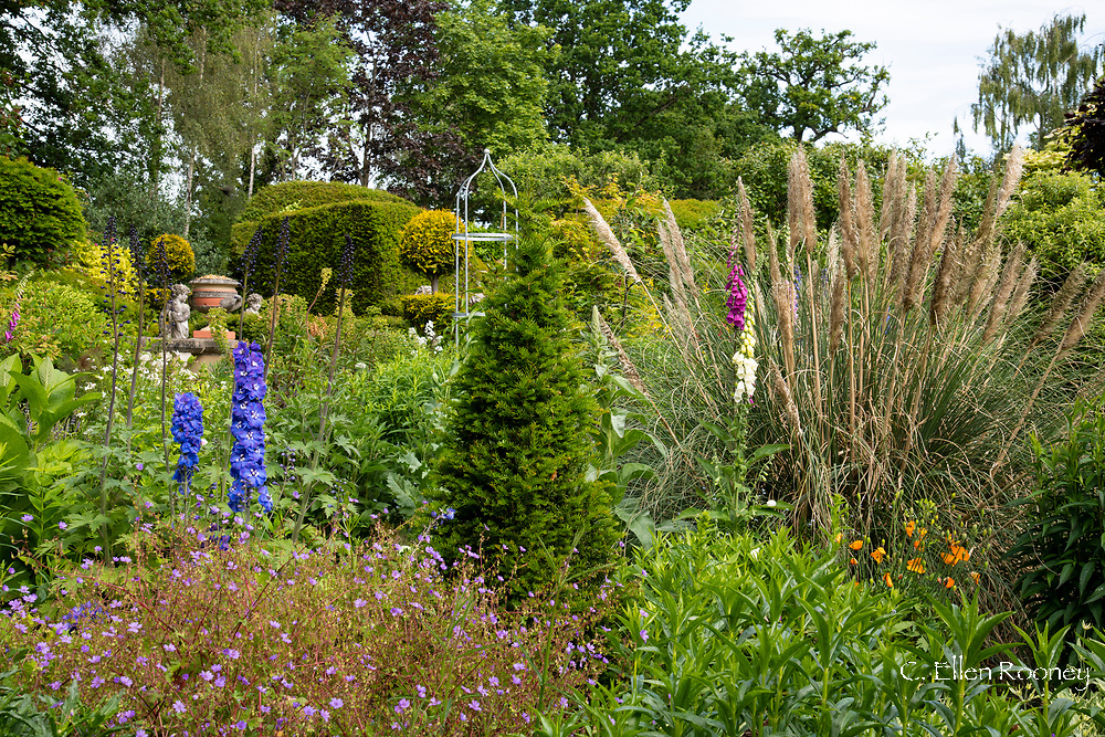 Delphinium, Taxus baccata and ornamental grasses in a section of the Laskett Gardens, Much Birch, Herefordshire, UK