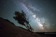 The Milky Way shines brightly over a lone tree at Grand Sable Dunes.