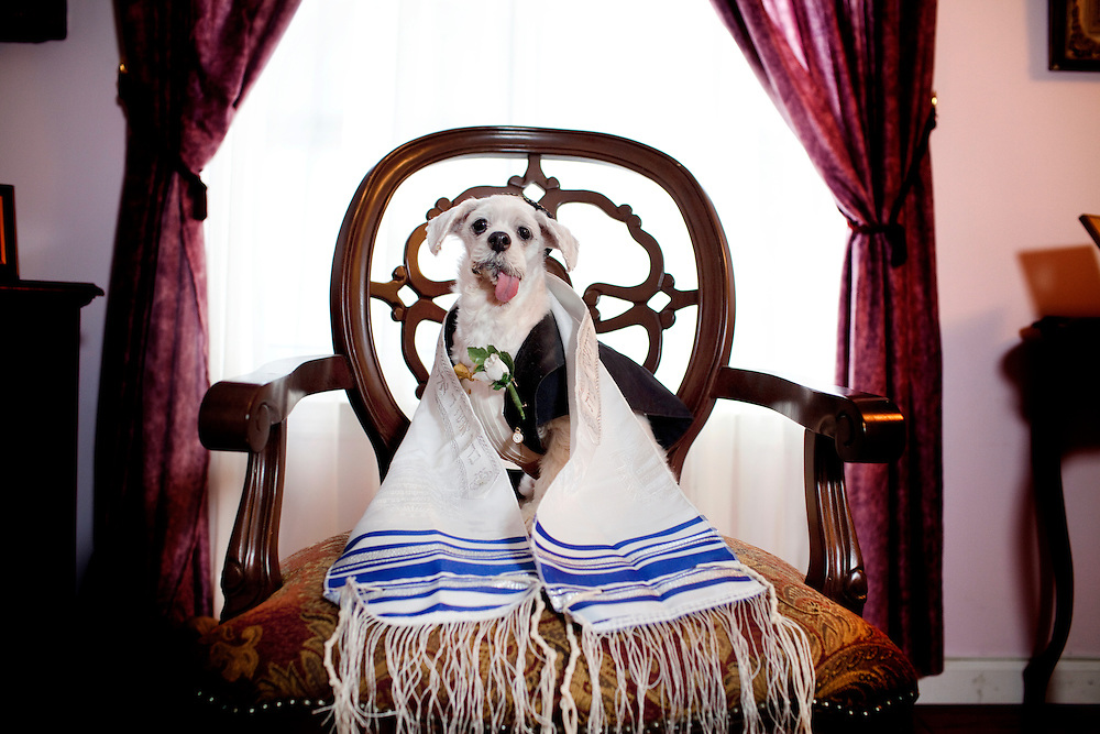 Lee Day is celebrating her dog Bark Mizva.<br />