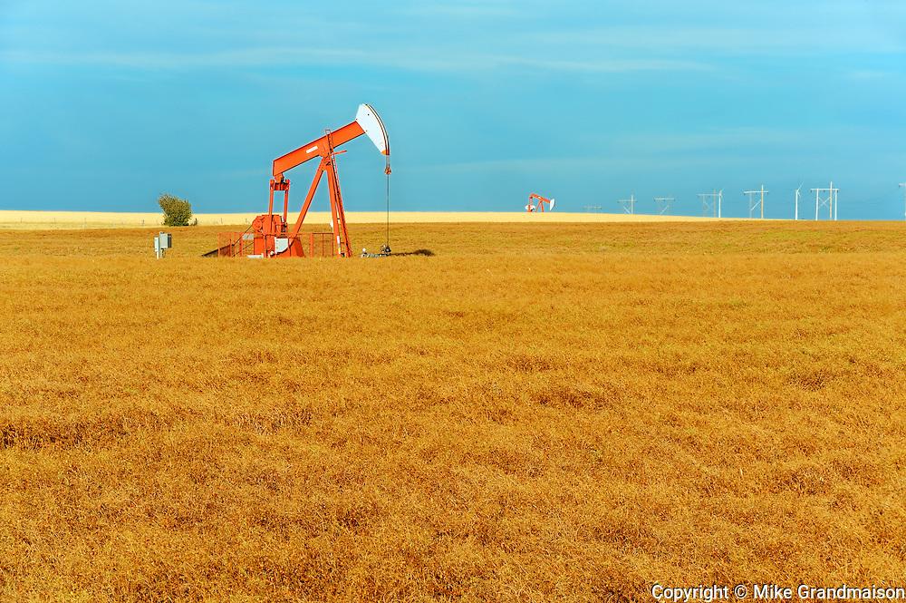 Lentils. Red. Oil pump jacks<br /> Carmichael<br /> Saskatchewan<br /> Canada