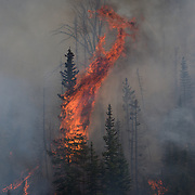 Monument Fire, Beaverhead-Deerlodge National Forests, Montana