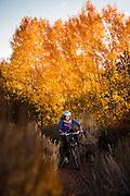 Fall colors and mountain biking though yellow Aspen in Reno, NV.