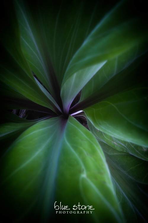 A delicate purple center of mountain forest flora in the high desert is immersed in deep green.<br />