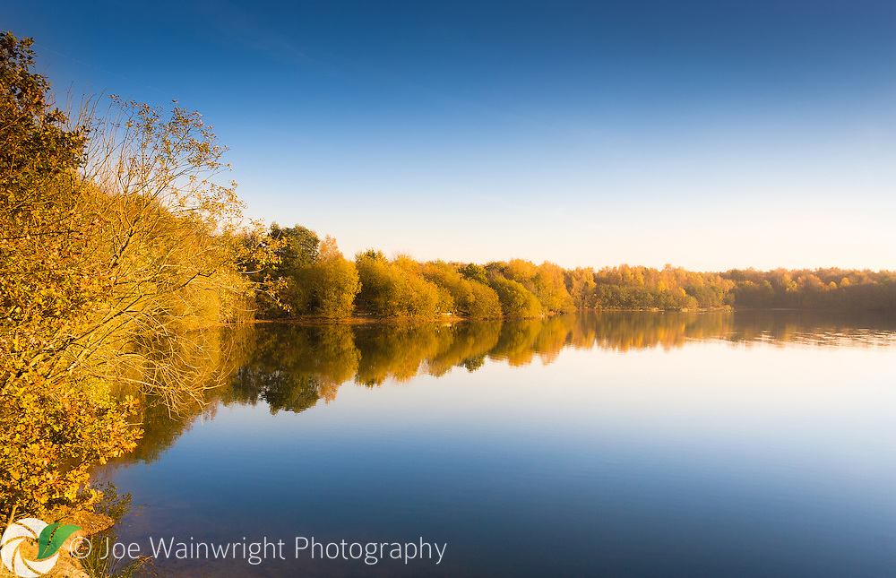 Birch trees reflected in the lake at Brereton Heath Local Nature Reserve, Cheshire, on a frosty November afternoon.