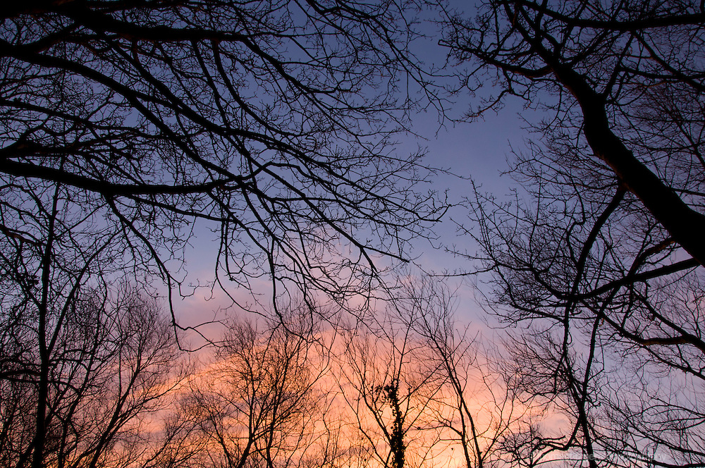 Winter Trees Shioluetted Against the warm light of Sunrise