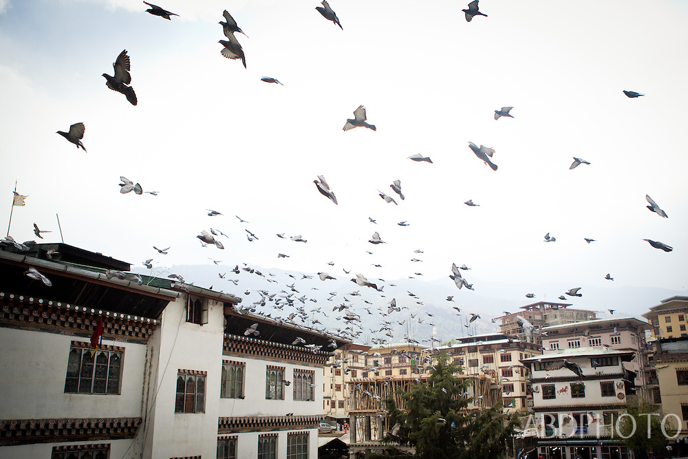 Flock of Birds in Thimphu Bhutan Asia