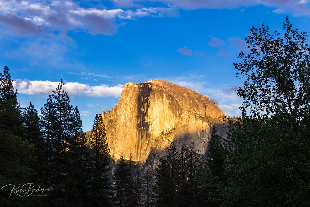 Evening light on Half Dome, Yosemite National Park, California USA