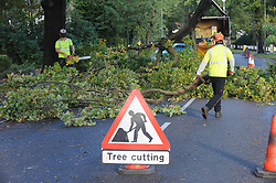 © Licensed to London News Pictures. 28/10/2013<br /> Tree surgeon's remove tree.<br /> Storm Damage today (28.10.2013)<br /> Malcolm Grover from Biggin Hill,Kent was driving his car under this tree on Chilshurst Road, Orpington at 6.30AM this morning, He is very lucky to be alive.  (photographer has his mobile number)<br /> A Tree across Chislehurst Road,Orpington,Greater London<br /> due to storm St Jude.<br /> Photo credit :Grant Falvey/LNP